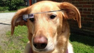 cane che indossa gli occhiali di google
