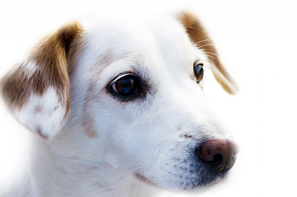 dog-1349074709d9b