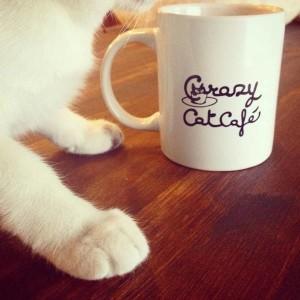 crazy_cat_milano_1